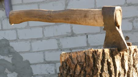 hatchet : Large village ax sticking in tree stump