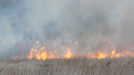 bush fire : Huge column of smoke from an elemental fire in the forest steppe, burning bushes and dry grass