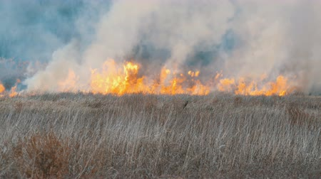bush fire : Terrible big high wildfire in the forest steppe. Dry steppe grass is burning in deep autumn