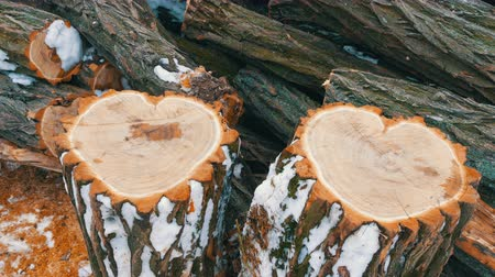 sawn : The unusual shape of two tree trunk in the shape of a heart, St. Valentines Day Stock Footage