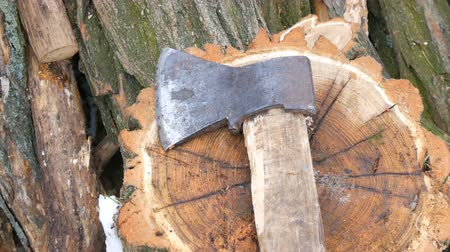 sawn : Ax lying on tree stump on a background of sawn trunks. Firewood for the winter.