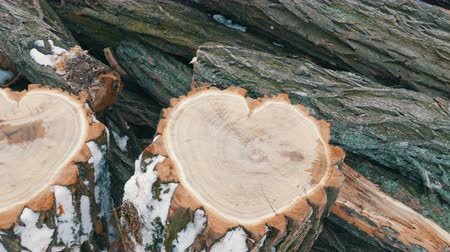 sawn : An interesting strange shape of the trunk of a tree in the shape of heart. Two felled tree trunk lie on the background of firewood, St. Valentines Day Stock Footage