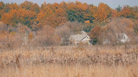 deep autumn : Lonely rural houses and dry gray steppe grass in a deep autumn Stock Footage