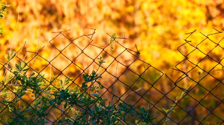 navíjení : Rabitz. Old fence on background of yellow autumn foliage