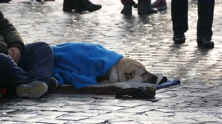 jobless : Nuremberg, Germany - December 1, 2018: Dog of homeless person, covered with a blue blanket, lies on the street. A stray dog, covered with a veil, lies on a city street, crowds of people walk by.