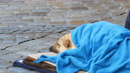 jobless : The white dog of homeless person, covered with a blue blanket, lies on the street. A stray dog, covered with a veil, lies on a city street, crowds of people walk by. Stock Footage