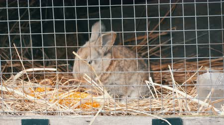 hay barn : Little newly born rabbit eat in cage Stock Footage