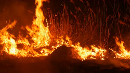 meteorological : A terrible dangerous wild fire at night in a field. Burning dry straw grass. A large area of nature in flames. Stock Footage
