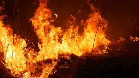 meteorological : Close up view of a terrible dangerous wild fire at night in a field. Burning dry straw grass. A large area of nature in flames.