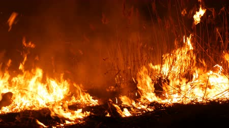 bush fire : A terrible dangerous wild fire at night in a field. Burning dry straw grass. A large area of nature in flames. Stock Footage