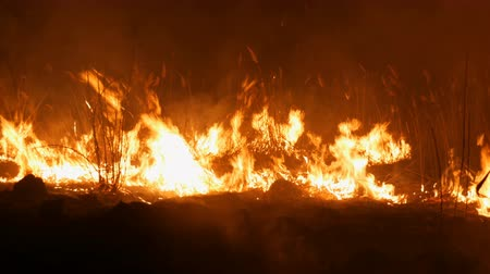 Close up view of a terrible dangerous wild fire at night in a field. Burning dry straw grass. A large area of nature in flames.
