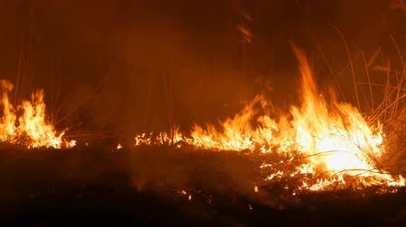 korkunç : Close up view of a terrible dangerous wild fire at night in a field. Burning dry straw grass. A large area of nature in flames.
