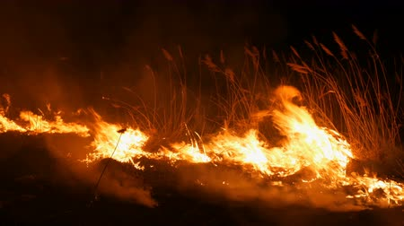 засуха : A terrible dangerous wild fire at night in a field. Burning dry straw grass. A large area of nature in flames. Стоковые видеозаписи