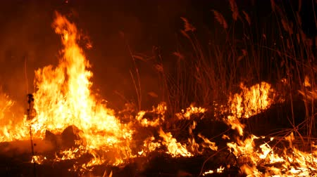 A terrible dangerous wild fire at night in a field. Burning dry straw grass. A large area of nature in flames. Wideo