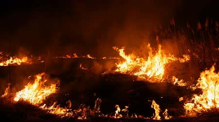 A terrible dangerous wild fire at night in a field. Burning dry straw grass. A large area of nature in flames. Vídeos