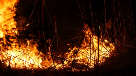 futótűz : Close up view of a terrible dangerous wild fire at night in a field. Burning dry straw grass. A large area of nature in flames.