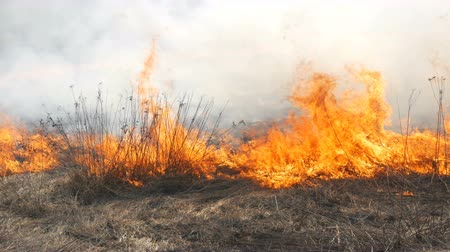 View of terrible dangerous wild high fire in the daytime in the field. Burning dry straw grass. A large area of nature is in flames. Dostupné videozáznamy