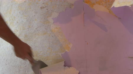 ruptura : The male builders hand rips off or peel old pink wallpaper from the wall with a special spatula
