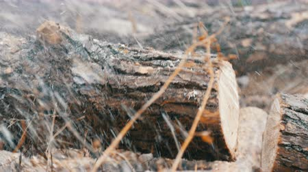 motorsäge : Close up cuts dry tree trunks with red chainsaw, sawdust fly everywhere