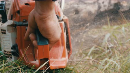 silvicultura : A man cuts dry tree trunks with chainsaw, sawdust fly everywhere