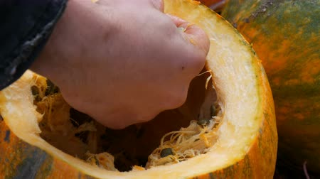 hacı : A mans hand cleans the inside of a pumpkin from seeds to cut a pumpkin for Halloween.