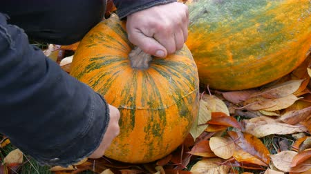 hacı : Male hand cuts off the top of pumpkin with a sharp knife to cut the pumpkin for Halloween Stok Video