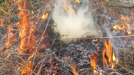 ot : Dry grass is burned and smoldering close up