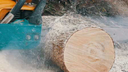 топор : Chainsaw sawing dry wood lying on the ground