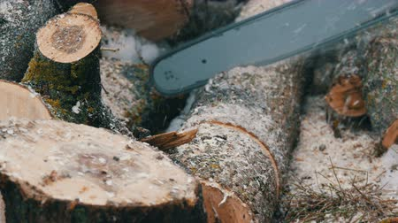 hatchet : Chainsaw sawing dry wood lying on the ground