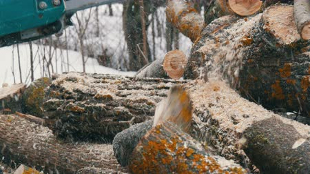 лесозаготовки : Chainsaw sawing dry wood lying on the ground