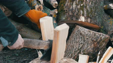 woodcut : Mans hands chop large logs and tree trunks with ax for a future fire