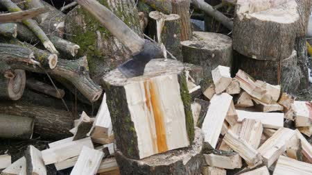 fejsze : Mans hands chop large logs and tree trunks with ax for a future fire