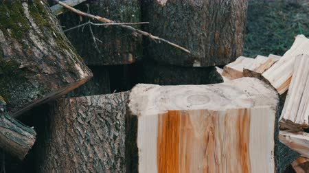 hatchet : Man woodcutter chops tree trunks with an ax for firewood