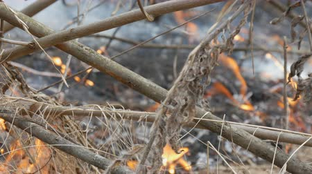 inflammable : Burning dry grass and branches close up view. Dangerous wild fire in the nature