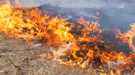civakodás : Dangerous wild fire in nature, burns dry grass. Burnt black grass in forest glade
