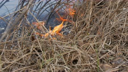 sabotage : Burning dry grass and branches close up view. Dangerous wild fire in the nature