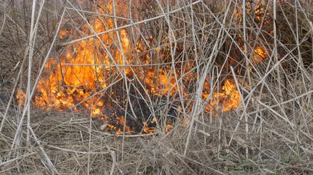 sabotage : Burning grass and branches close up view. Dangerous wild fire in the nature