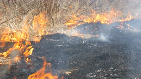 hořlavý : Dangerous wild fire in nature, burns dry grass. Burnt black grass in forest glade