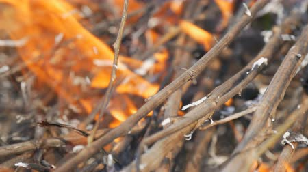 imprudence : Burning grass and branches close up view. Dangerous wild fire in the nature