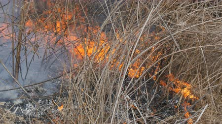 inflammable : Burning grass and branches close up view. Dangerous wild fire in the nature