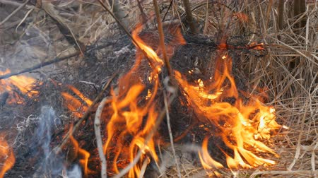wood glade : Dangerous wild fire in nature, burns dry grass. Burnt black grass in forest glade