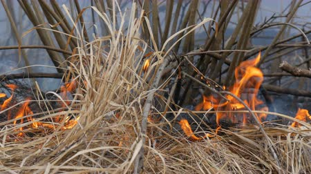 gyúlékony : Dangerous wild fire in nature, burns dry grass. Burnt black grass in forest glade