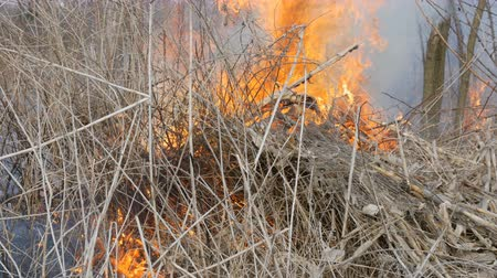 gyúlékony : Burning grass and branches close up view. Dangerous wild fire in the nature