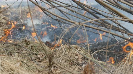 sabotage : Dangerous wild fire in nature, burns dry grass. Burnt black grass in forest glade