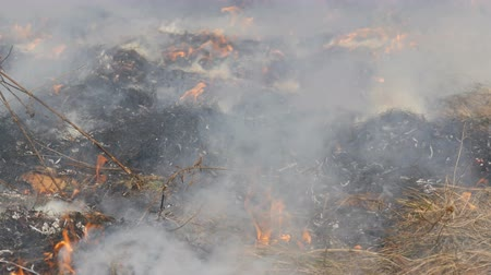 combust : Dangerous wild fire in nature, burns dry grass. Burnt black grass in forest glade