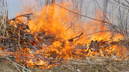 inflamável : Burning dry grass and branches close up view. Dangerous wild fire in the nature