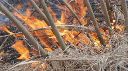 wood glade : Burning dry grass and branches close up view. Dangerous wild fire in the nature