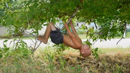 primaz : The five-year blonde funny dirty child hanging on a tree branch in the countryside a summer day. Child in nature