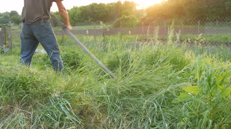 admission : Strong man farmer mows a green grass with hand scythe on the background of the setting sun. Hay harvest
