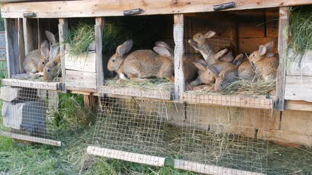 dışkı : Many different rabbits in cage on the home farm